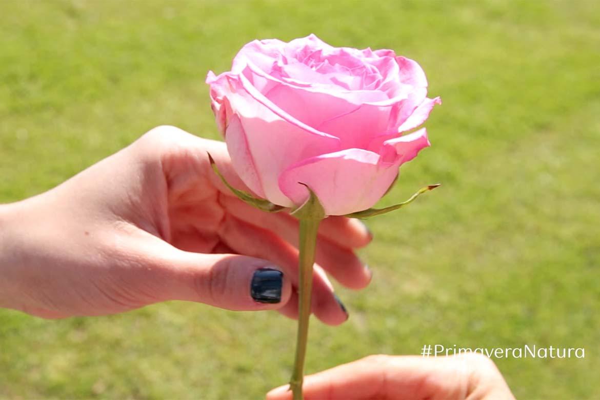infinidad accion flor